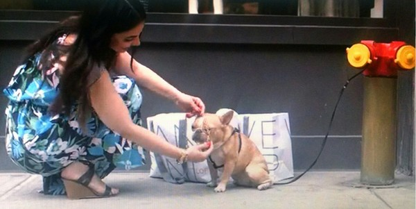 LOFT New York City National Pet Day event on Saturday and save 30 percent